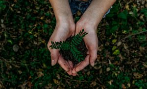 Going Green - Future or Fallacy?
